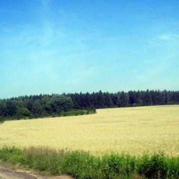 Rezerwat Sasanka w Jaworznie