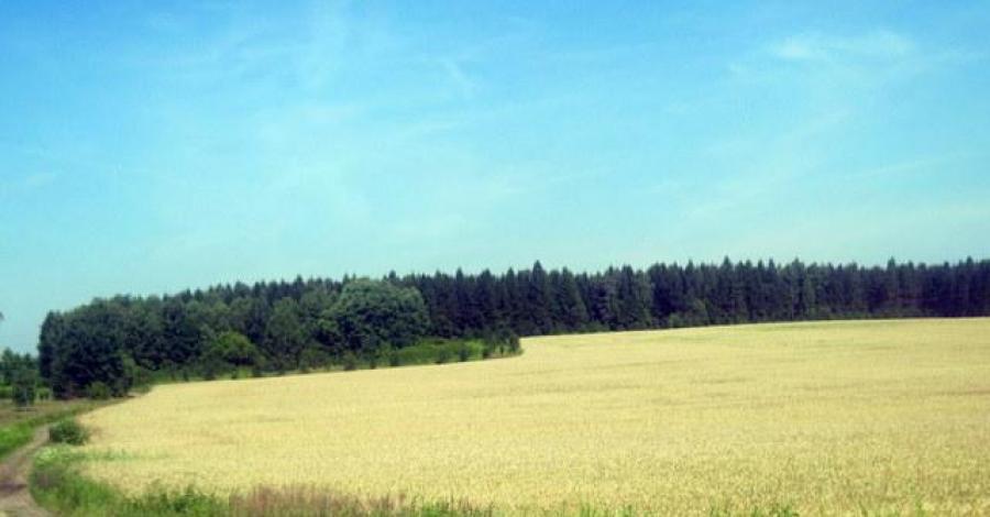 Rezerwat Sasanka w Jaworznie - zdjęcie