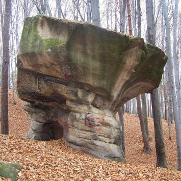 Rezerwat Kamień Grzyb w Nowym Wiśniczu