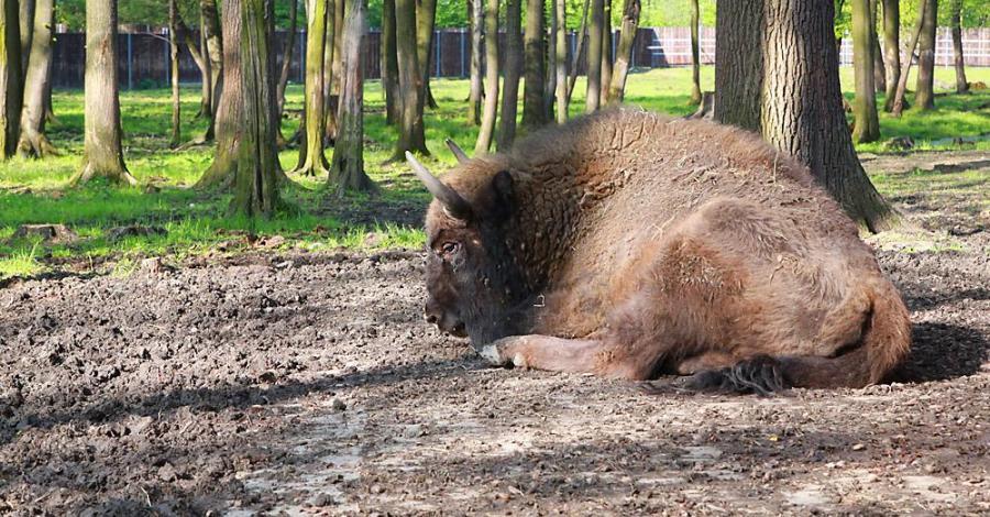 Rezerwat Borki na Mazurach - zdjęcie