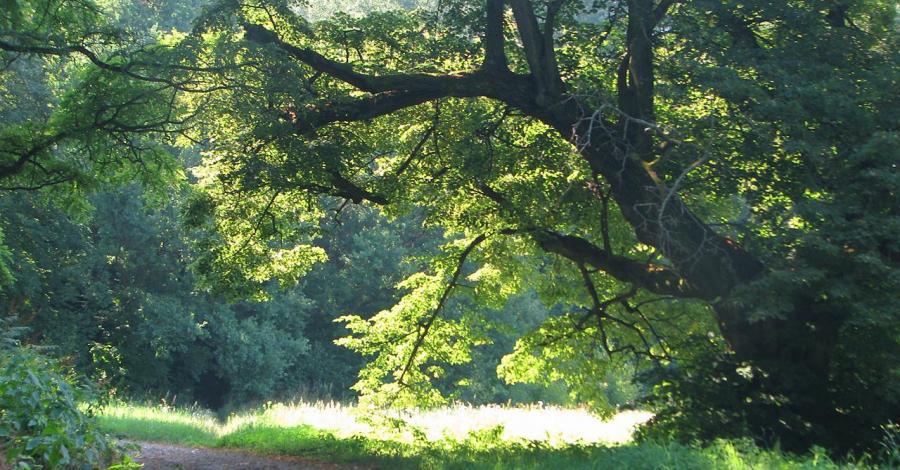 Rezerwat Zielonka w Czyżowie Szlacheckim - zdjęcie