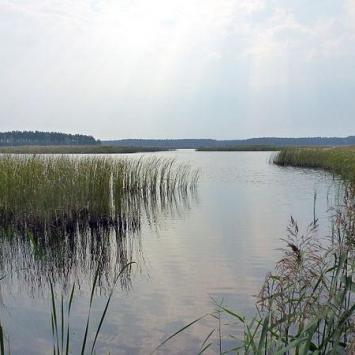 Lasy Janowskie w Janowie Lubelskim