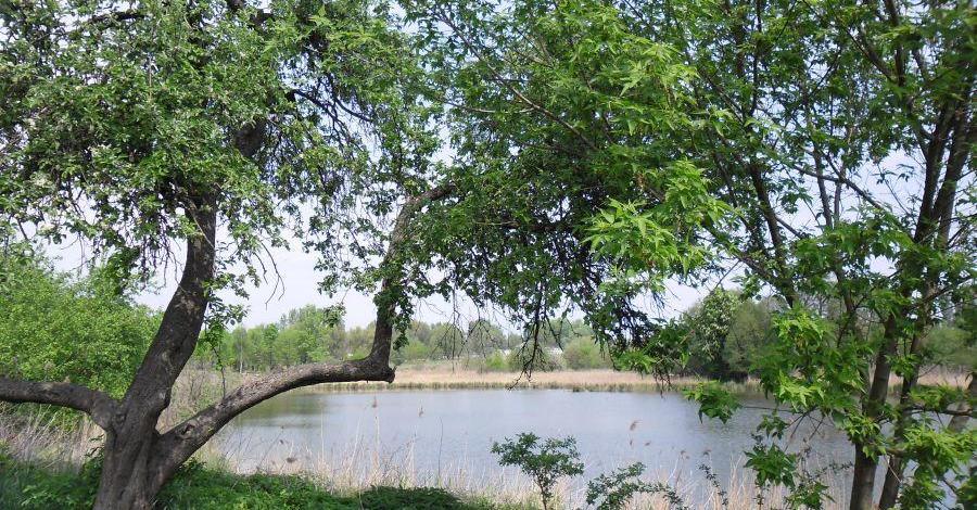 Czeszewski Las - zdjęcie