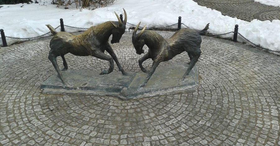 Koziołki na Placu Kolegiackim w Poznaniu - zdjęcie