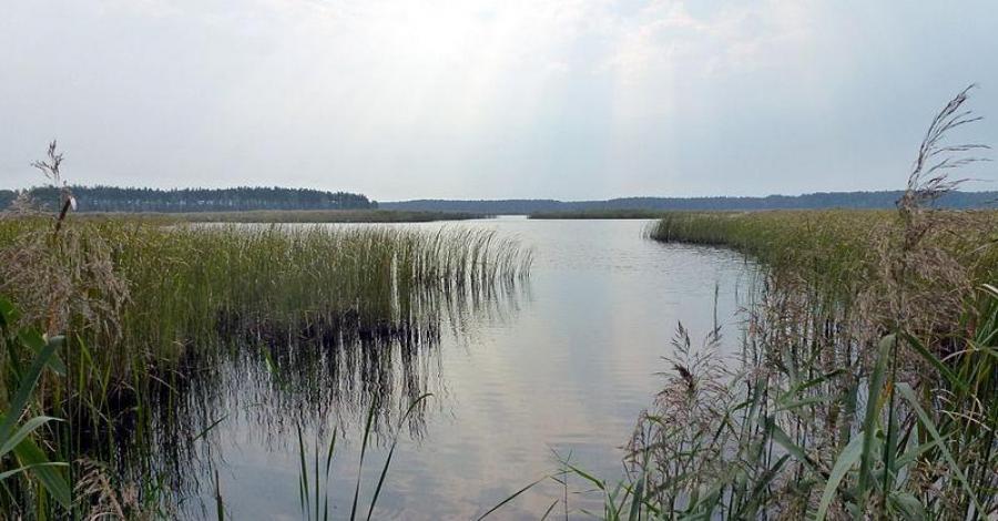 Lasy Janowskie w Janowie Lubelskim - zdjęcie