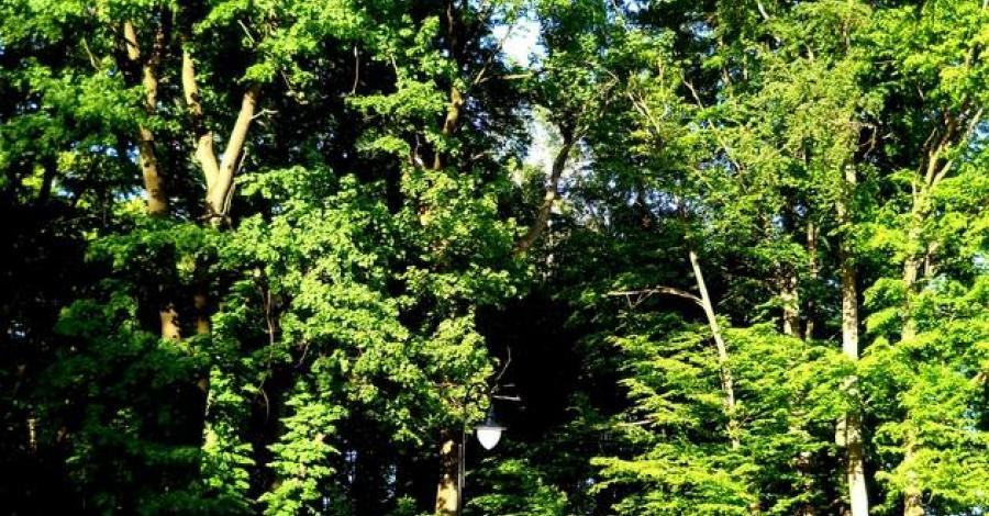 Park dworski w Nowym Narcie - zdjęcie