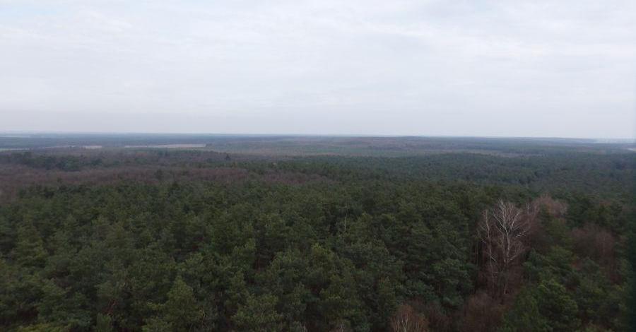 Puszcza Zielonka - zdjęcie