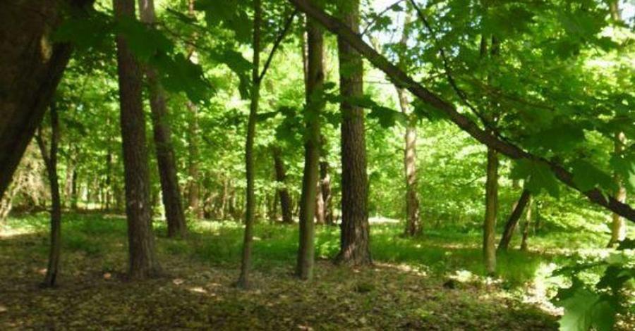 Rezerwat Buczyna w Sulmierzycach - zdjęcie
