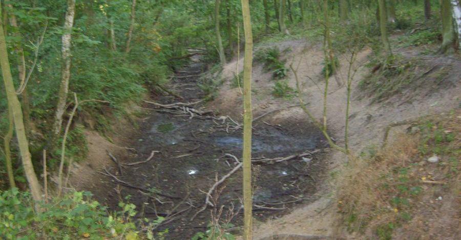 Rezerwat Klasztorne Modrzewie - zdjęcie