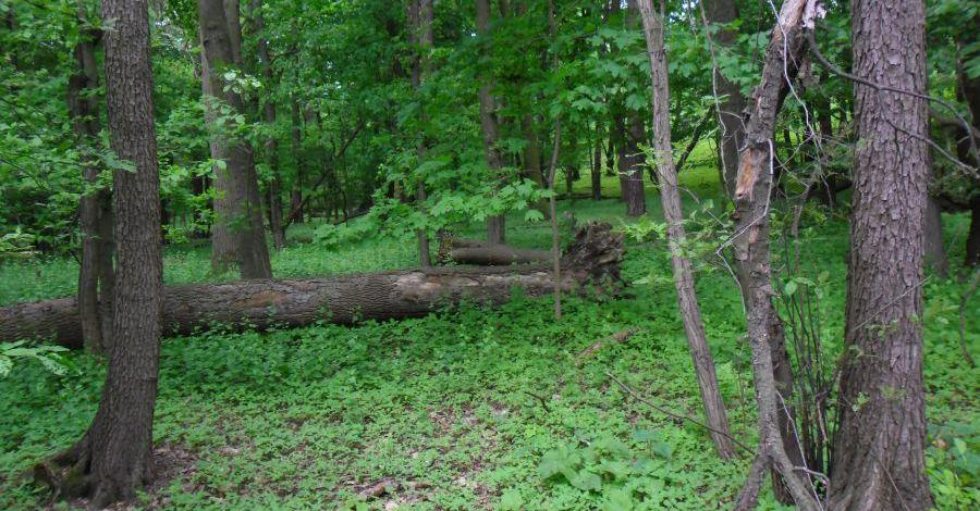 Rezerwat Żurawiniec w Poznaniu - zdjęcie