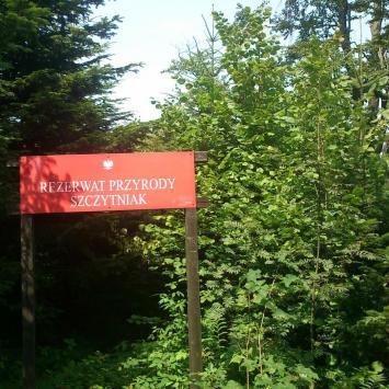 Szczytniak . Pasmo Jeleniowskie , Góry Świętokrzyskie - zdjęcie