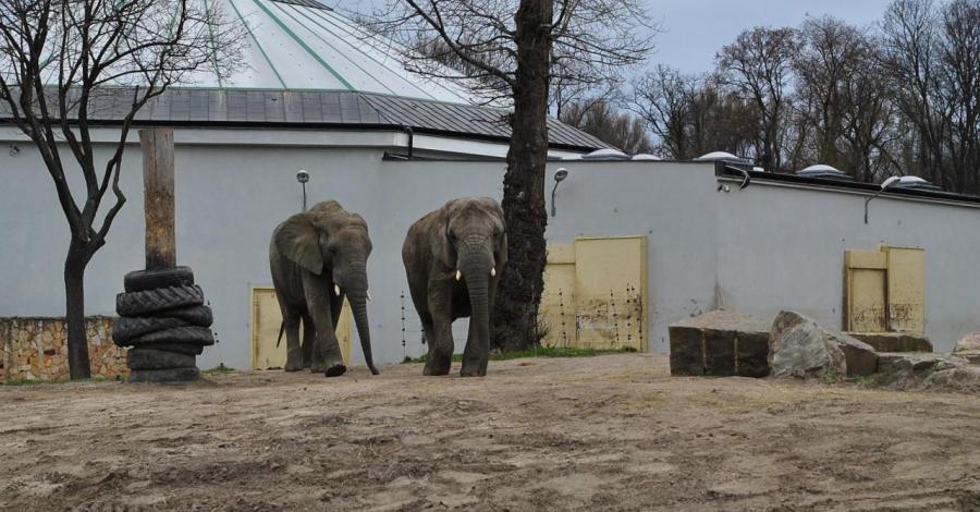 Zoo w Warszawie - zdjęcie