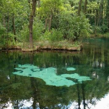 Rezerwat Niebieskie Źródła - zdjęcie