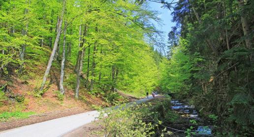Dolina Białej Wisełki idealna na spacery - zdjęcie