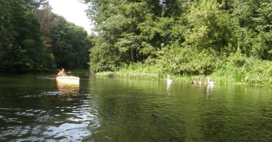Spływy Drwęcą - zdjęcie