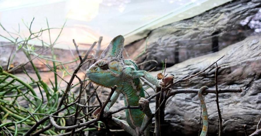 Zoo w Zamościu :) - zdjęcie