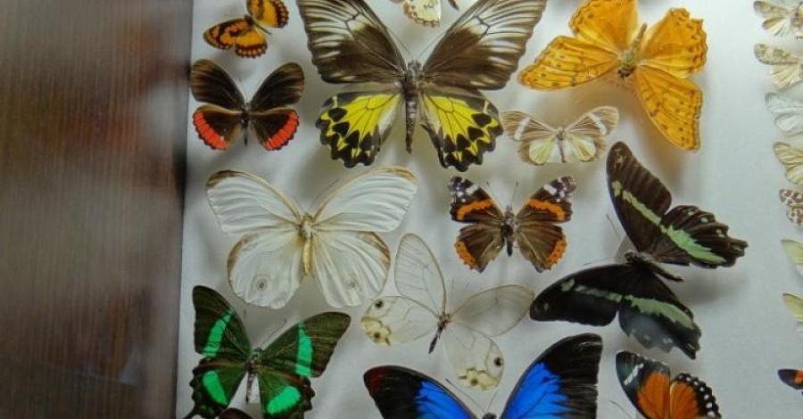 Muzeum Motyli we Władysławowie - zdjęcie