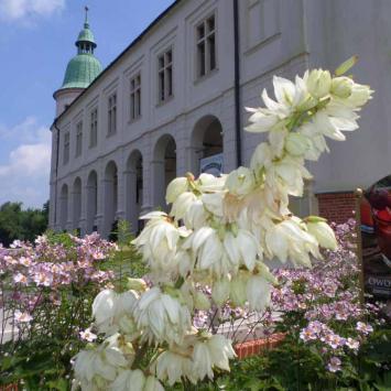 Baranów Sandomierski - Mały Wawel