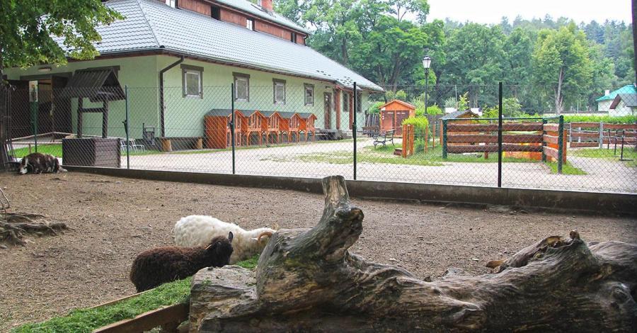 Stajnia i mini zoo w Żywcu - zdjęcie