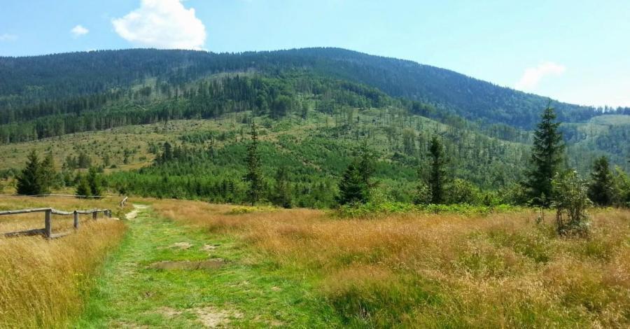 Główny Szlak Beskidzki - zdjęcie