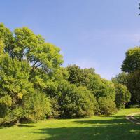 Park w Maciejowicach