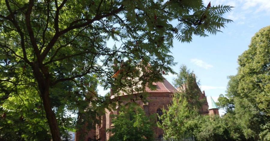 Kościół NMP Królowej Polski w Świebodzinie - zdjęcie