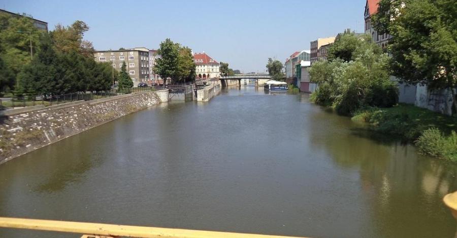 Młynówka w Opolu - zdjęcie