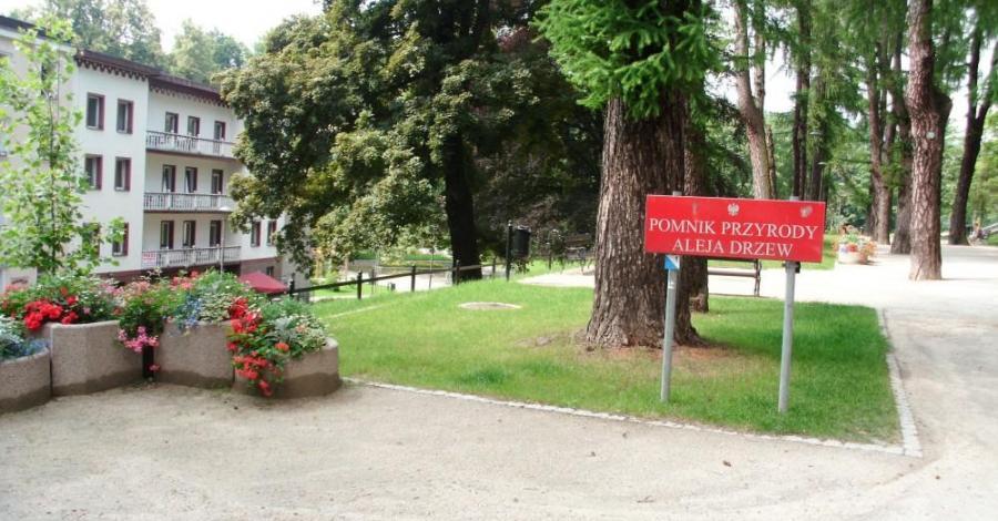 Aleja Drzew w Lądku Zdroju - zdjęcie