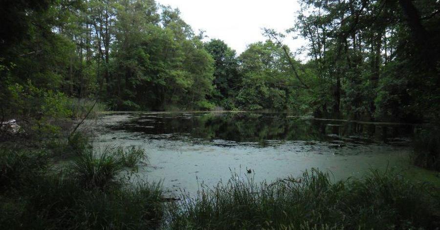 Jezioro Czarna Woda w Koninie - zdjęcie