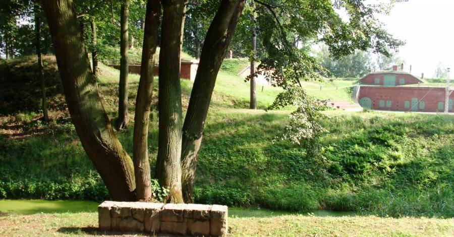 Park Miejski w Nysie - zdjęcie