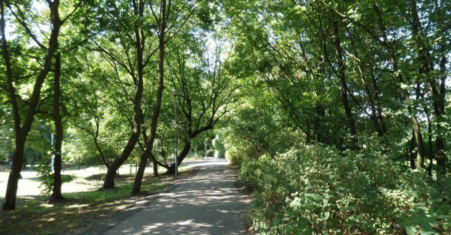 Park Witosa w Bydgoszczy - zdjęcie