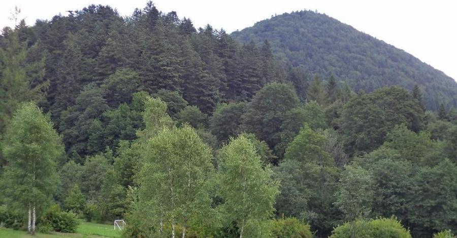 Wzgórze Walter - zdjęcie