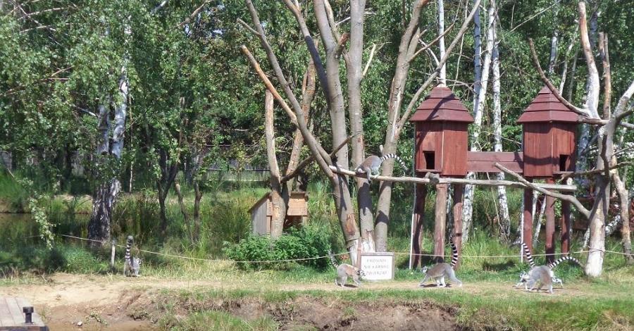 Zoo w Dolinie Charlotty - zdjęcie