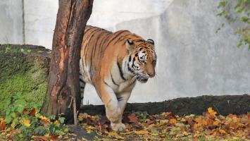 Zoo w Łodzi - zdjęcie