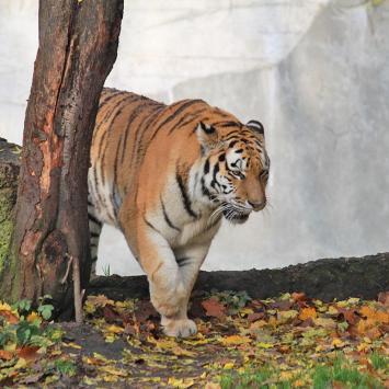 Zoo w Łodzi