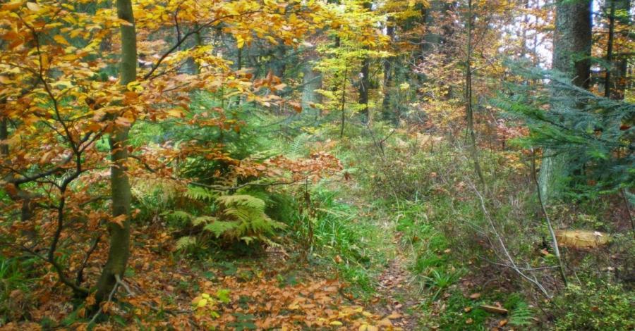 Jesienna Rysianka - zdjęcie