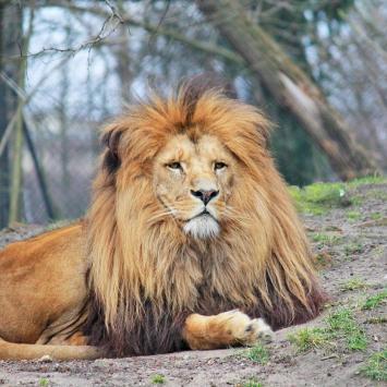 Zoo we Wrocławiu - zdjęcie