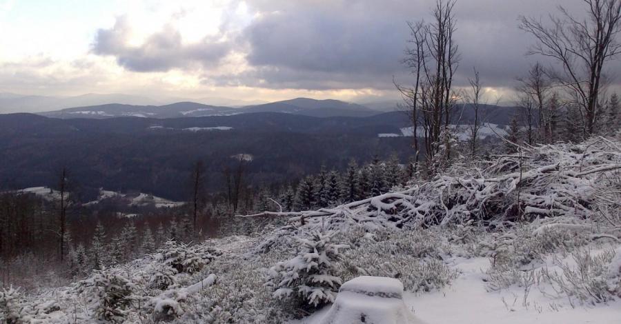 Borówkowa Góra - zdjęcie