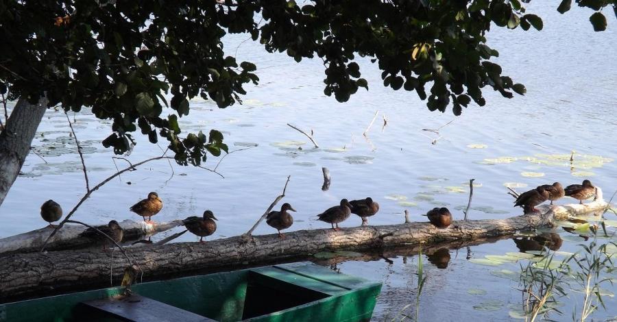 Jezioro Niskie Brodno - zdjęcie