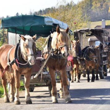 Pojazdy na Św Krzyż, gustaw5 gustaw525@wp.pl