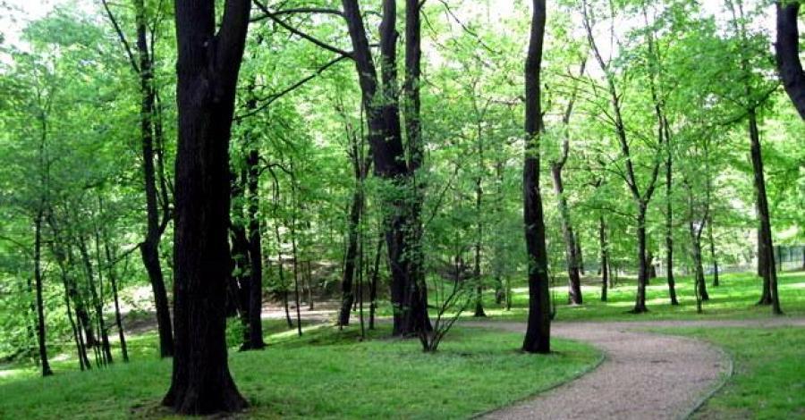 Park Schona w Sosnowcu - zdjęcie
