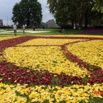Poznan - koziołki na  dywanach kwiatowych .