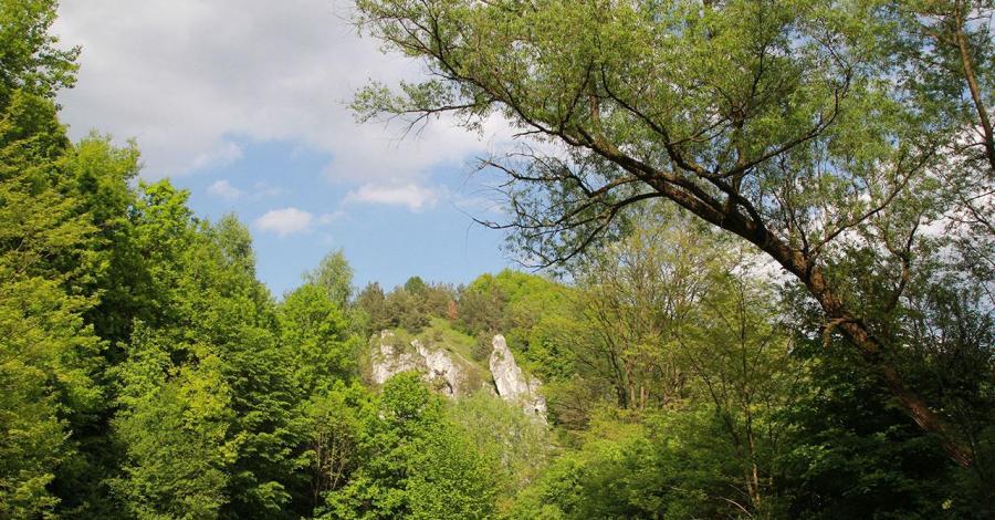 Szlak Dolinek Jurajskich - zdjęcie