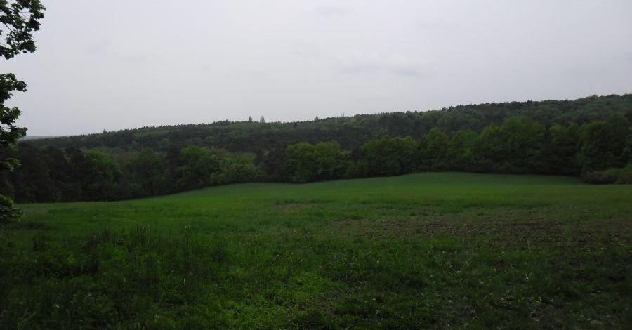 Rezerwat Krajkowo - zdjęcie