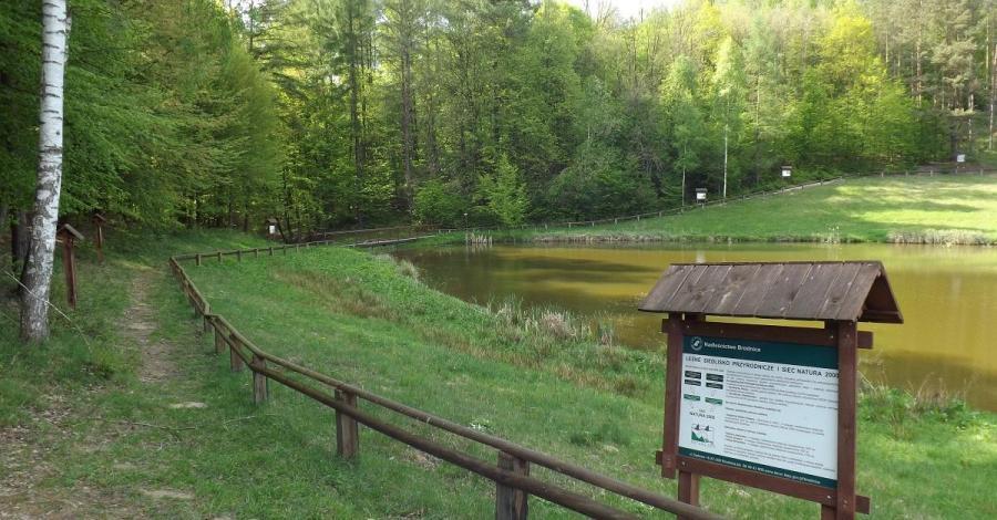 Rezerwat Szumny Zdrój - zdjęcie