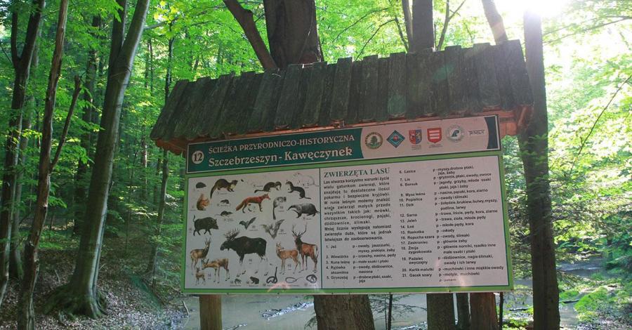 Wąwozy lessowe w Szczebrzeszynie - zdjęcie