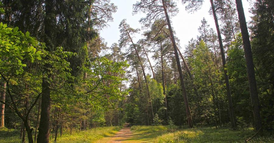 Roztoczański Park Narodowy, Anna Piernikarczyk