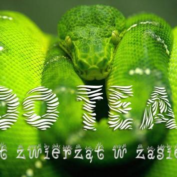 Wystawa zwierząt egzotycznych Zoo Team we Wrocławiu
