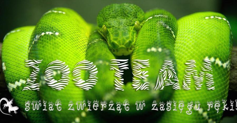 Wystawa zwierząt egzotycznych Zoo Team we Wrocławiu - zdjęcie