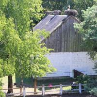 gniazda na dachach